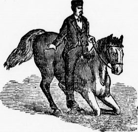 EXCERPT FROM BLACK BEAUTY: THE AUTOBIOGRAPHY OF A HORSE