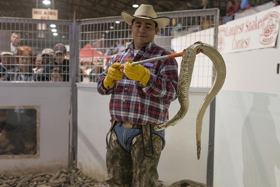 Cowboy s Tips - Texas Rattlesnakes