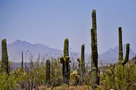 The Exotic Plants of New Mexico