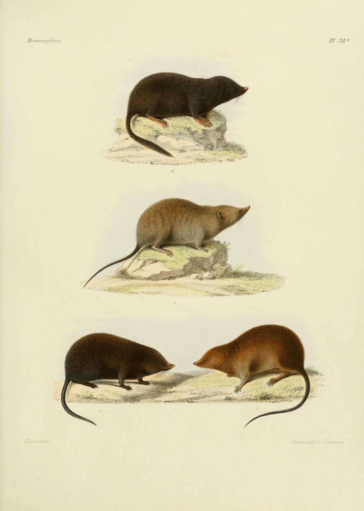 Moles and Rats