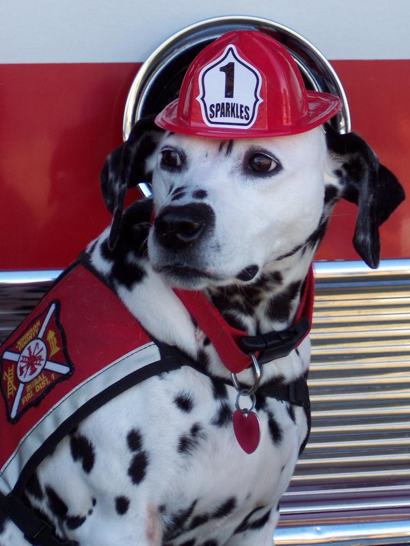 Spotty the Fire Dog and Fire Dog