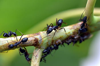 The Intelligence of Ants