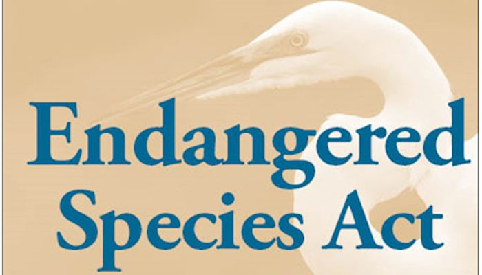The Endangered Species Act.